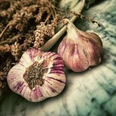 garlic-139659__340